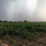 Aulakh farms