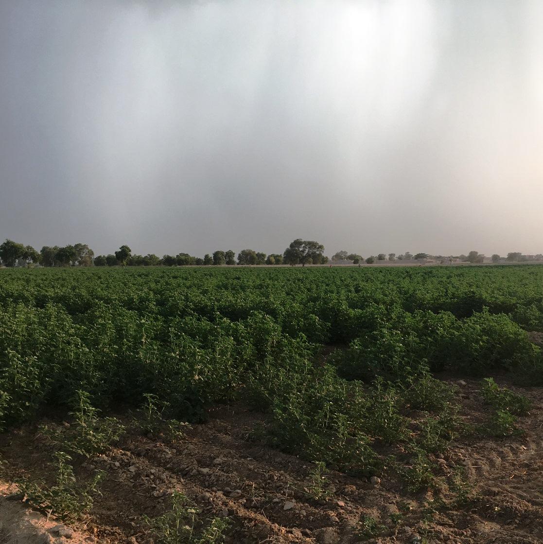 Aulakh farms
