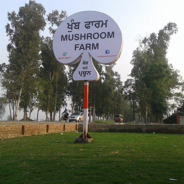 Randhawa mushroom farm